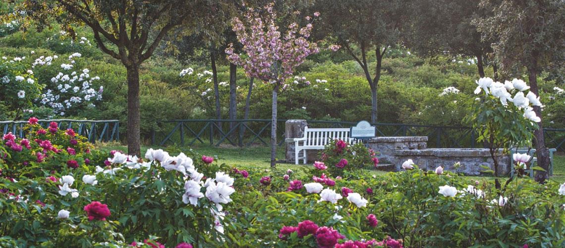 Organizzare La Visita Al Parco Centro Botanico Moutan